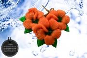 002-0053 ชบาสีส้ม